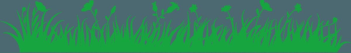 herbe frise