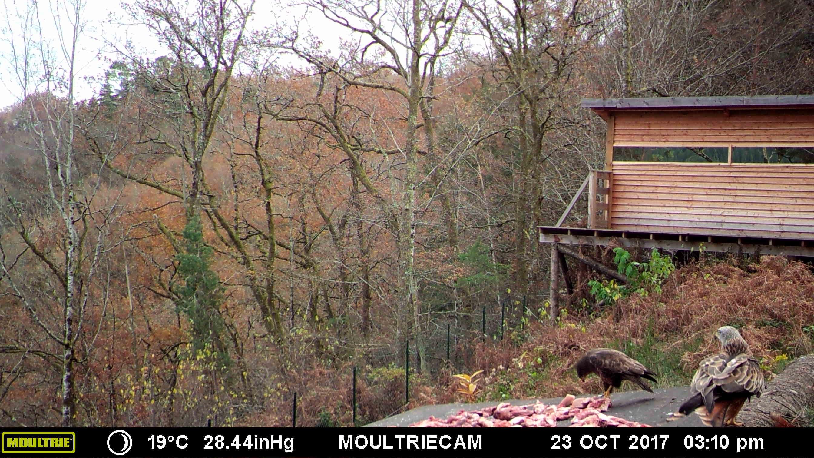 © Moultrie Digital Game Camera